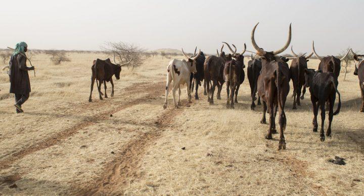 La desertificación, una herida abierta de nuestro consumo