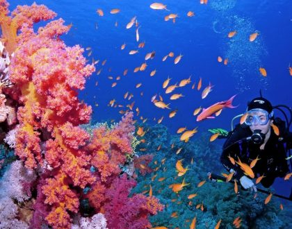 Líderes mundiales al rescate de los arrecifes de coral
